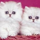 Cats-cats-7017644-800-600