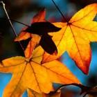 Autumn-Feat