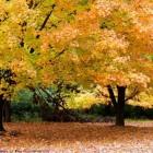 Autumn Desktop 12