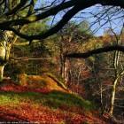 Autumn Desktop 13