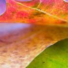 Autumn Desktop 15