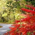 Autumn Desktop 16