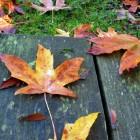 Autumn Desktop 18