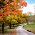 Autumn Desktop 19